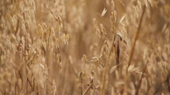 Cheerios TV Spot, 'Oat Field' - Thumbnail 7