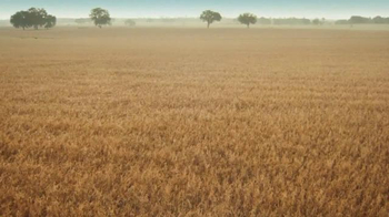 Cheerios TV Spot, 'Oat Field' - Thumbnail 9