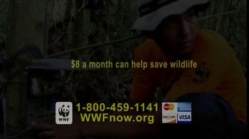 World Wildlife Fund TV Spot, 'Tigers' - Thumbnail 6