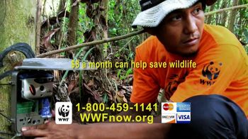 World Wildlife Fund TV Spot, 'Tigers' - Thumbnail 7