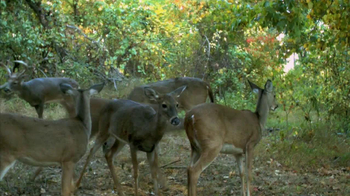 Big & J Long Range Attractant TV Spot - Thumbnail 6