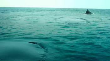 Pacific Life TV Spot, 'Whale Watching' - Thumbnail 4