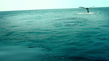 Pacific Life TV Spot, 'Whale Watching' - Thumbnail 5