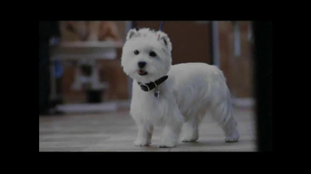 PetSmart Grooming Salon TV Spot, 'Coupon' - Thumbnail 1