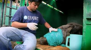 International Fund for Animal Welfare TV Spot, 'Helping'