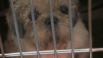 ASPCA TV Spot, 'Somewhere in America' - Thumbnail 2