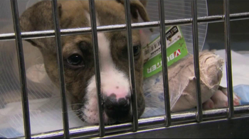 ASPCA TV Spot, 'Somewhere in America' - Thumbnail 4