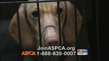 ASPCA TV Spot, 'Somewhere in America'