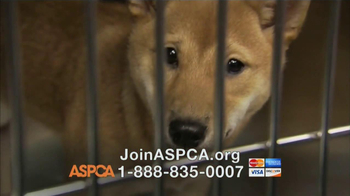 ASPCA TV Spot, 'Somewhere in America' - Thumbnail 7