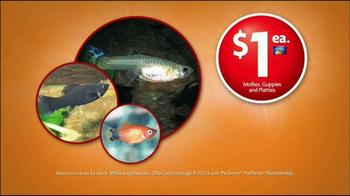 PetSmart Fall Savings Sale TV Spot, 'New Pet' - Thumbnail 8
