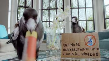 Windex TV Spot, 'Barra ensuciadora' [Spanish] - Thumbnail 8