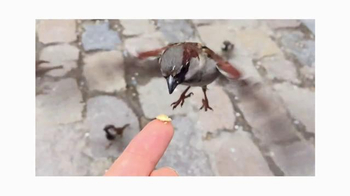 Apple iPhone TV Spot, 'Shot on iPhone 6 by Antoine D.' Song by Vulfpeck - Thumbnail 4