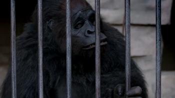 Mentos TV Spot, 'Gorilla' - Thumbnail 8