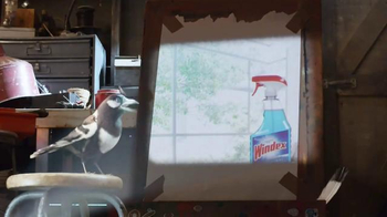 Windex TV Spot, 'Smudge Stick' - 6917 commercial airings
