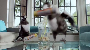 Windex TV Spot, 'Smudge Stick' - Thumbnail 4