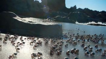 Dr Pepper TV Spot, 'One of a Kind Crab Shell' - Thumbnail 2