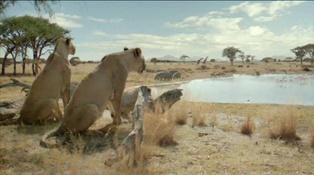 Fiber One TV Spot, 'Don't Fight Your Instincts: Lionesses' - 2426 commercial airings