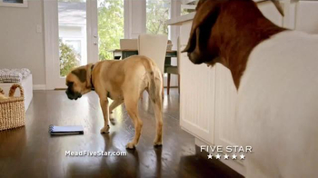 Five Star Flex TV Spot, 'Cinco the Dog vs. Five Star Flex' - 225 commercial airings