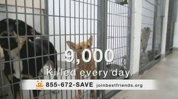 Best Friends Animal Society TV Spot, 'Alfie' Featuring Lisa Edelstein - Thumbnail 3