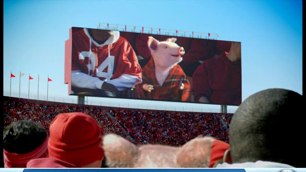 Maxwell the GEICO Pig TV Commercials - iSpot.tv