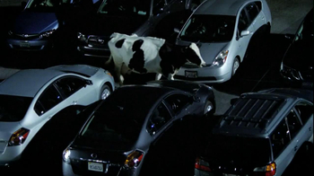Chick-fil A TV Spot, 'Car Alarm Cows'  - 53 commercial airings