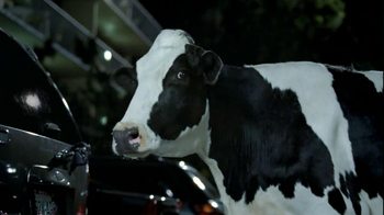 Chick-fil A TV Spot, 'Car Alarm Cows'  - Thumbnail 4