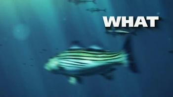 The Fish Bomb TV Spot - Thumbnail 1