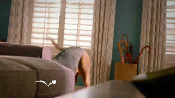 PetSmart TV Spot, 'Pet Toys' - Thumbnail 2