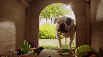 PetSmart TV Spot, 'Pet Toys' - Thumbnail 5