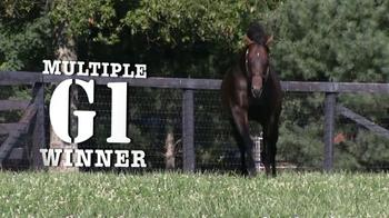 Winstar Farm, LLC TV Spot, 'Colonel John' - Thumbnail 9