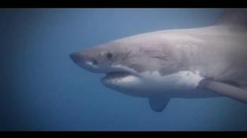 Oceana TV Spot,'Great White Sharks' Featuring January Jones - Thumbnail 2