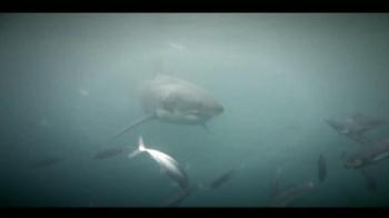 Oceana TV Spot,'Great White Sharks' Featuring January Jones - Thumbnail 6