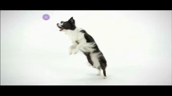 Wellness Pet Food TV Spot, 'GMO-Free' - Thumbnail 4