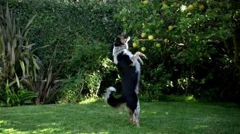 Skechers GoWalk 2 TV Spot, 'Dogs' - Thumbnail 6