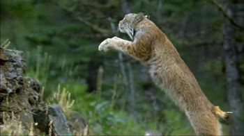 Blue Buffalo Wilderness TV Spot, 'Wild Cat' - Thumbnail 4