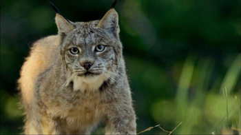 Blue Buffalo Wilderness TV Spot, 'Wild Cat' - Thumbnail 5