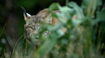 Blue Buffalo Wilderness TV Spot, 'Wild Cat' - Thumbnail 8