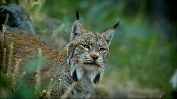 Blue Buffalo Wilderness TV Spot, 'Wild Cat'