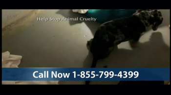 Humane Society TV Spot, 'Season's Greetings' - Thumbnail 4