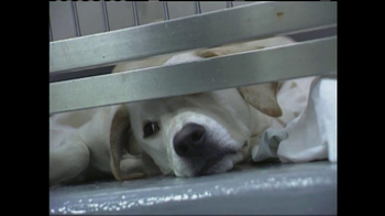ASPCA TV Spot 'Silent Night' - Thumbnail 4