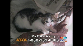 ASPCA TV Spot 'Silent Night' - Thumbnail 6