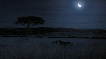 GEICO TV Spot, 'Antelope with Night Vision Goggles' - Thumbnail 1