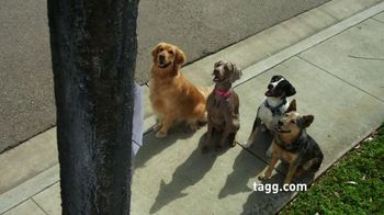 Tagg TV Spot, 'Lost Dogs'