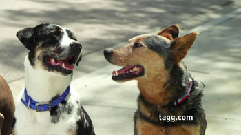 Tagg TV Spot, 'Lost Dogs' - Thumbnail 3