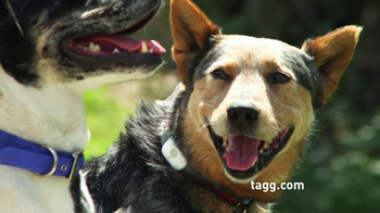 Tagg TV Spot, 'Lost Dogs' - Thumbnail 4