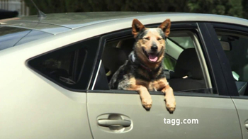 Tagg TV Spot, 'Lost Dogs' - Thumbnail 8