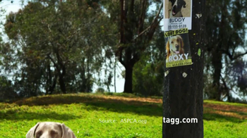 Tagg TV Spot, 'Lost Dogs' - Thumbnail 9