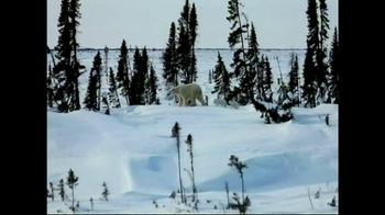 World Wildlife Fund TV Spot, 'Be the Voice Polar Bears' - Thumbnail 1