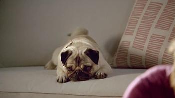 Bissell Spotbot Pet TV Spot, 'Frankie the Pug' - Thumbnail 2