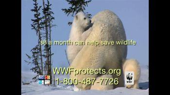 World Wildlife Fund TV Spot, 'Polar Bears: Look Closely'
